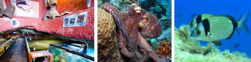 Aquarium Ibiza